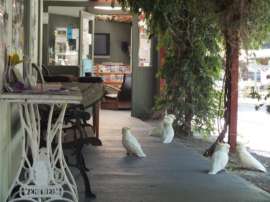 Tim's Place : Reception and the resident cockatoos