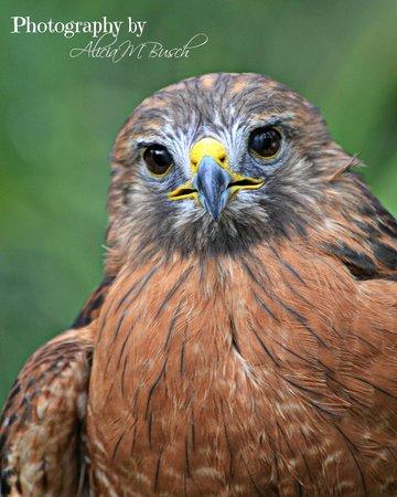 Brevard Zoo : Birds of Prey