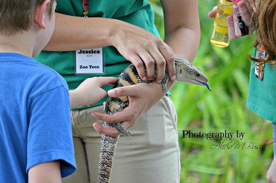 Brevard Zoo : Reptiles