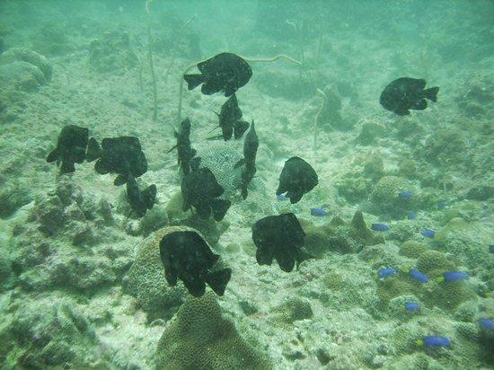 Infinity Ocean Diving - Private Diving : Plongée à Racha Yai