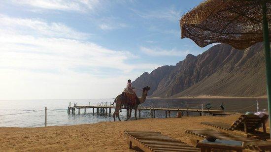 Happy Life Village : Уединенный и очень спокойный в утренние часы пляж