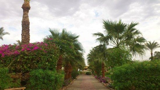 Happy Life Village : Оазис среди пустыни