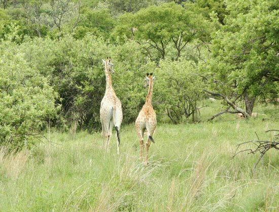 Kloofzicht Lodge & Spa: Mother and Child