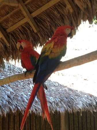 Tambopata Research Center : Macaws in the research center