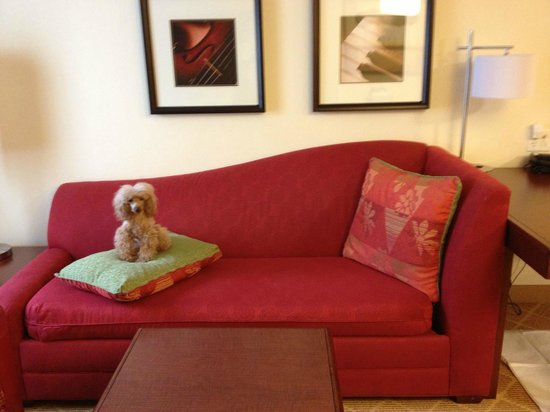 Residence Inn Chapel Hill: Puppy Sofa : )