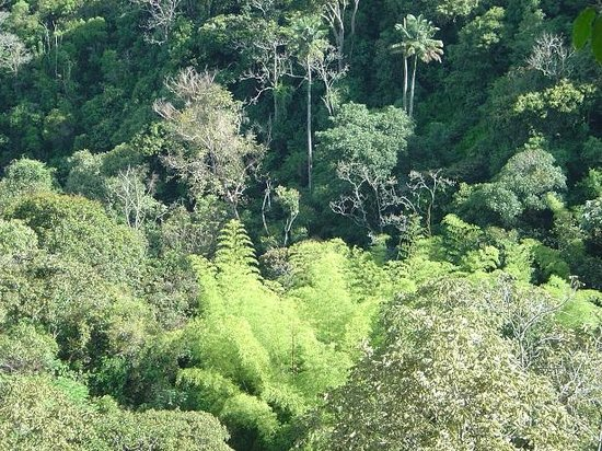 "Salento, Colombia: Our well preserved Rain Fores,t overlooking the ""Guadual"" (native bamboo)."