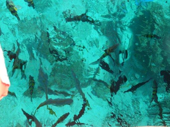 Sol Cayo Largo: Mar dei Caraibi
