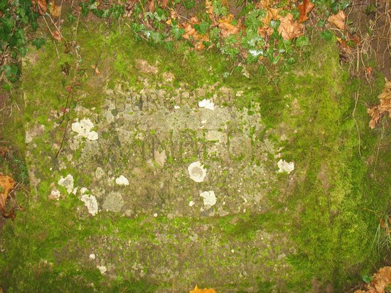 Windeck Castle: Overgrown Stoen Inscription with Castle Name