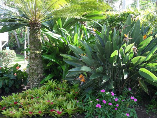Areca Palms Estate Bed and Breakfast: Beautiful tropical plants and trees