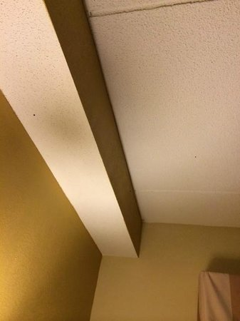Country Inn & Suites By Carlson, Raleigh-Durham Airport : Ladybugs on ceiling