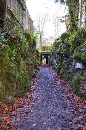 Ashford Castle : On a walk along the river