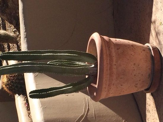 JW Marriott Scottsdale Camelback Inn Resort & Spa: Just a random cactus.