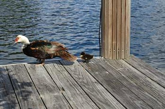 The Cabanas Guesthouse & Spa: Momma duck stops by to show her duckling all the amenities the Cabanas has to offer
