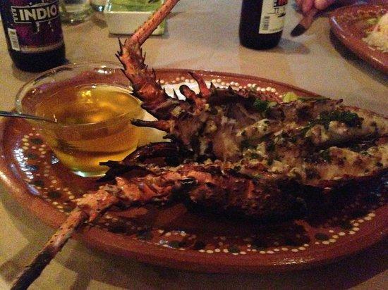 Tierra Viva : Lobster!