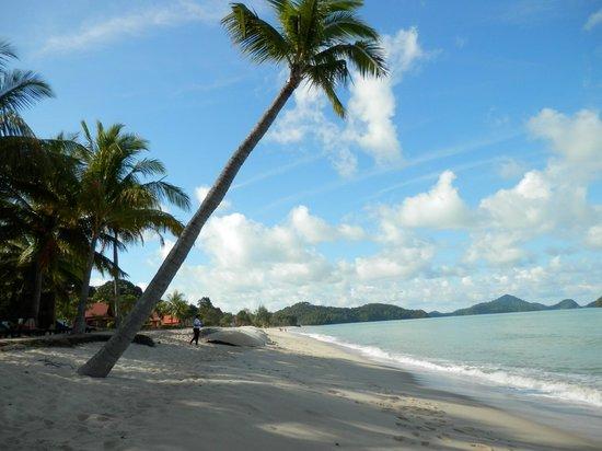 Sunset Beach Resort: plage et cocotiers