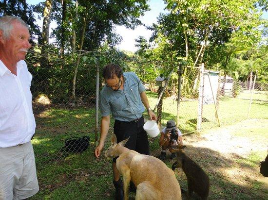 AEA Luxury Tours: Tour guide Kamin feeding the Kangaroos