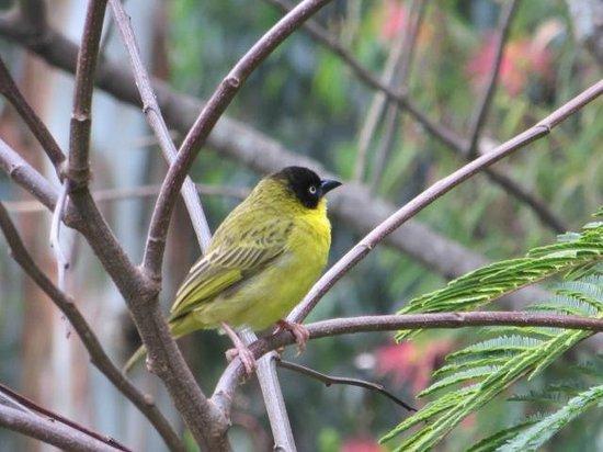 Bushara Island Camp: Aves