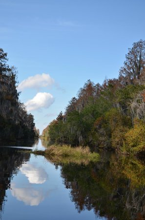 Okefenokee Adventures: up the canal