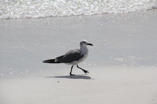 South Beach Condo/Hotel: local bird