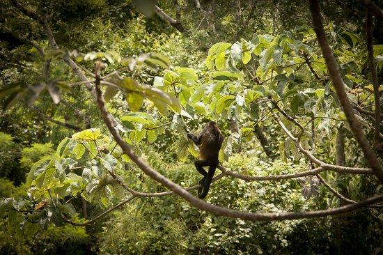 Costa Rica Yoga Spa: More Monkeys