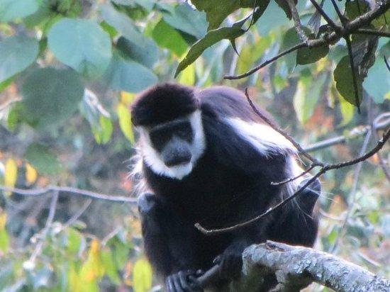 Gorilla Mist Camp : Vistas