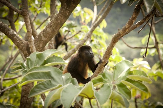Costa Rica Yoga Spa: More Monkeys