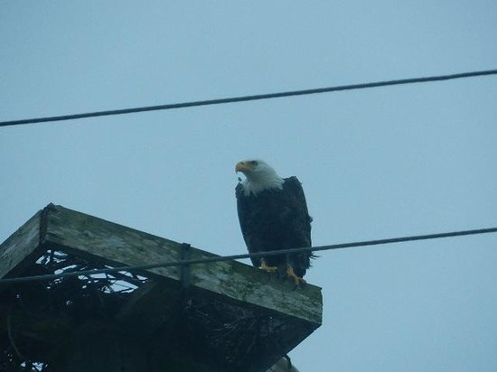 Lake Kissimmee State Park : Saw these 2 Eagles as we were leaving the park.