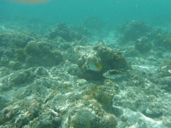 The Black Pearl at Puaikura : An underwater shot