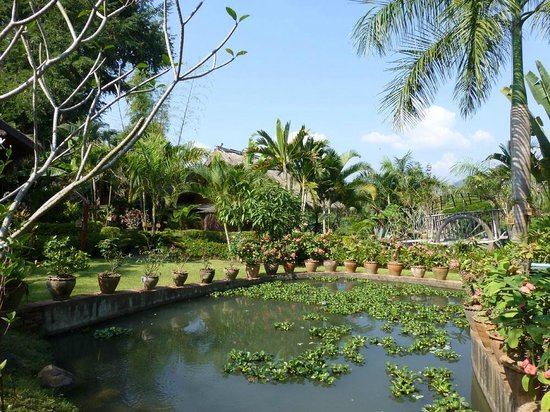 Thongbay Guesthouse: The pond in the lovely garden