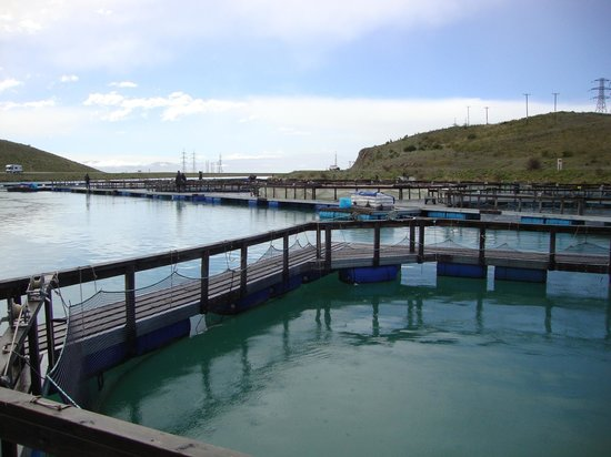 High Country Salmon: the farm