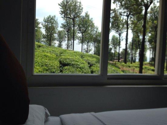 Gruenberg Tea Plantation Haus : View from room 109