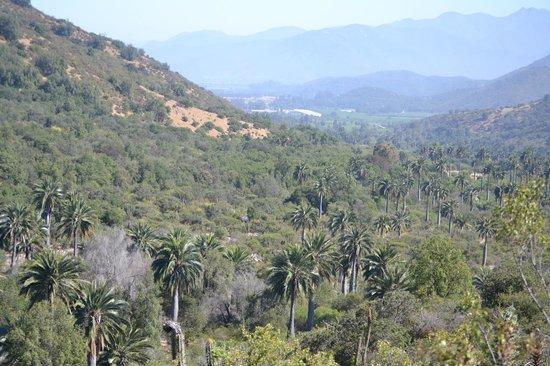Fueguinos Nature Trips: La Campana - Chilean Palms