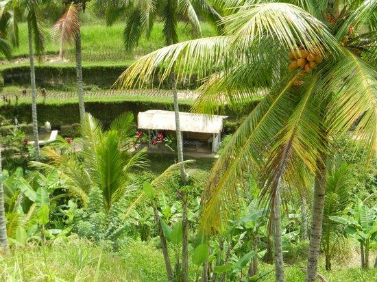 Tegalalang Rice Terrace: Tegallalang Rice Terrace