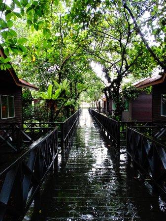 Kinabatangan Riverside Lodge: A view of the lodges.