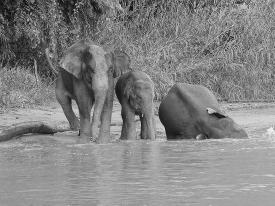 BEST wildlife sightings @ Kinabatangan Riverside Lodge. I <3 this place!