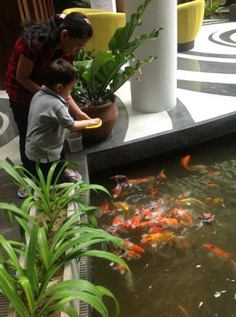 Swiss-Belhotel Rainforest: my son enjoy feeding the fish, the staffs are kind, so they let my son feed the fish