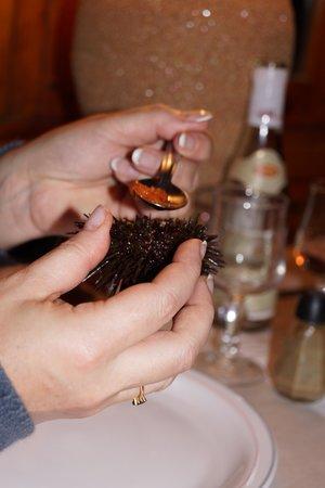 Araignee Gourmande : Dégustation d'oursins