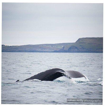 The Stone House B&B: Fluke tail of a humpback