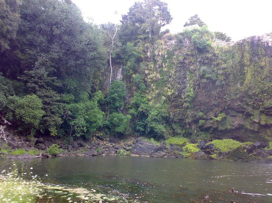 Whangarei Falls: Off the left side of the falls