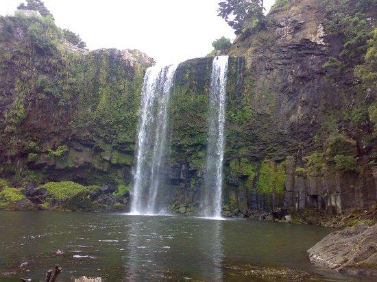 Whangarei Falls: The falls