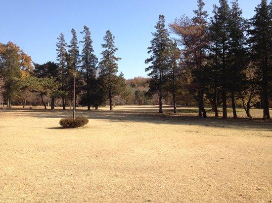 Nogawa Park : 芝生