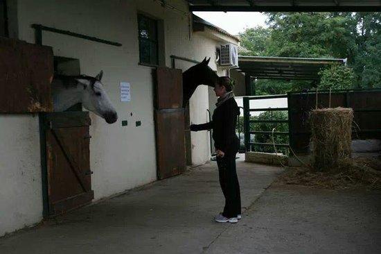 Podere dell'Arco Country Charme : i cavalli