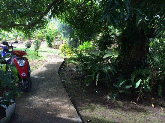 Jacoway Inn's garden