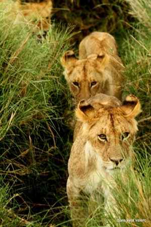 Cheetah Tented Camp: brothers