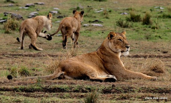 Cheetah Tented Camp: playing