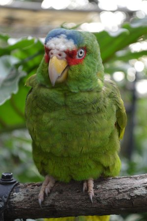 Refugio Herpetologico de Costa Rica: You can see by how healthy the birds are - the great work they do