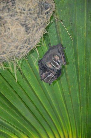 Tilajari Hotel Resort: Gorgeous animals were hiding everywhere
