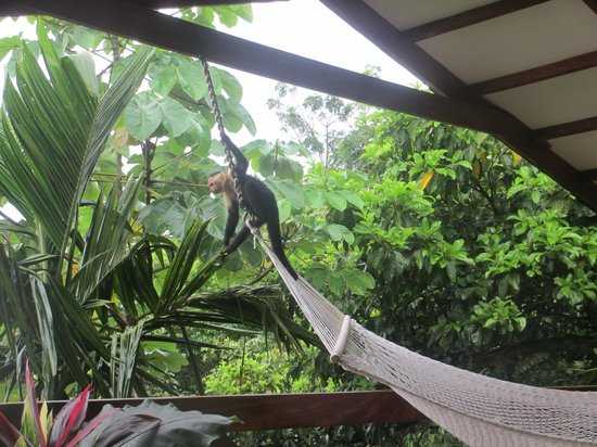 Tulemar Bungalows & Villas: Monkeys on Mot Mot deck