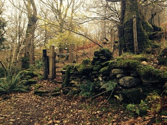 Tal-Y-Bont Country House B&B : one of the local walks