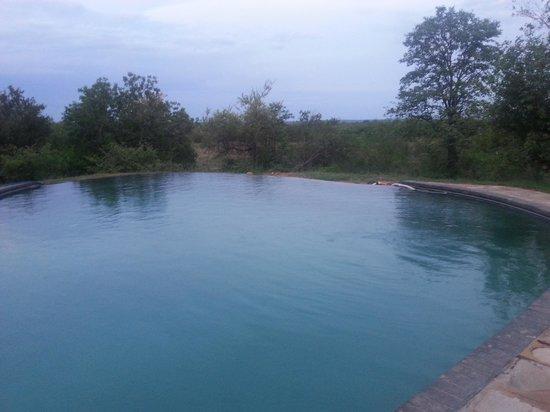 Infinite Swimming Pool - Picture of Silonque Bush Estate & Spa ...